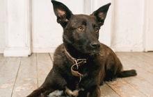 Собака с эльфийскими ушами ищет семью