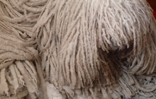 Комондора ( венгерской, шнуровой овчарки) щенков продаем