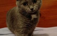 Молоденькая кошечка Маша в добрые руки