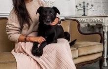 Собака-улыбака, лапу давака ищет надежный дом и диван