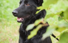 Красивый пёс Кекс в добрые руки