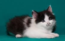 Котята ищут дом, в добрые руки