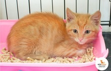 Солнечный котенок Ананасик ищет дом