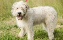 Красивая собака Лизонька ищет дом