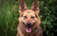 Пёс Бруно в добрые руки, В дар