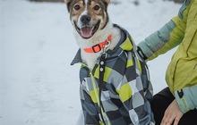 Красивый пес Сонник Джек ищет семью