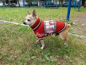 Скачать бесплатно foto Одежда для собак Одежда для собак и кошек Bagira-Dog 18275192 в Москве