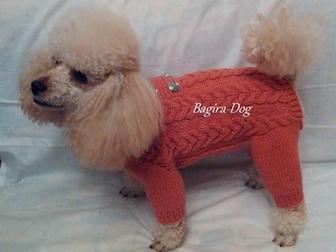 Смотреть фотографию Одежда для собак Одежда для собак и кошек Bagira-Dog 18275192 в Москве