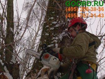 Увидеть изображение Разное Омолаживающая обрезка деревьев – необходимо делать весной 32413857 в Москве