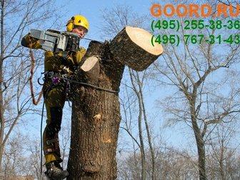 Смотреть фотографию Разные услуги Обрезка деревьев арбористами, частично и полностью в Москве и Подмосковье 32938127 в Москве
