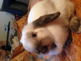 Новое foto  Распродажа декоративных кроликов по низким ценам 32975733 в Москве