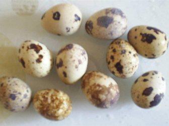 Смотреть изображение Яйца Инкубационное яйцо перепелов Белый гигант 33183229 в Москве
