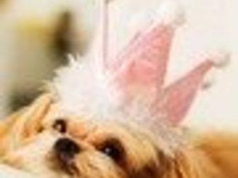 Скачать бесплатно изображение Услуги для животных Профессиональная стрижка собак в салоне и на дому Западный Округ 33237105 в Москве