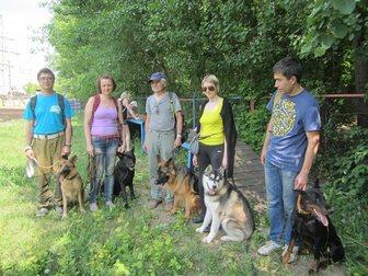 Свежее foto  дрессировка собак в северном округе 33380089 в Москве