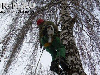 Увидеть фотографию Разные услуги Удаление деревьев частями, Москва, услуги 33658355 в Москве