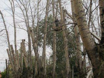 Просмотреть фото Разные услуги Санитарная обрезка деревьев и кустарников 34600934 в Москве