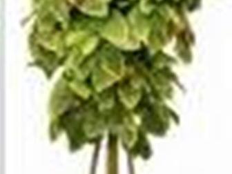 Свежее фото  Искусственные деревья на заказ 35138214 в Москве