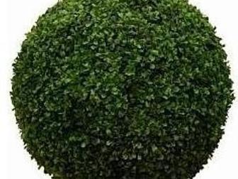 Просмотреть фотографию  Искусственные деревья на заказ 35138214 в Москве