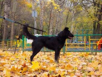 Уникальное foto  Молодая активная собака Честа в хорошие руки, 44181668 в Москве
