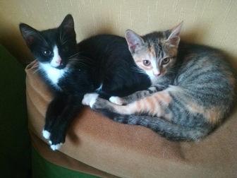 Скачать бесплатно фотографию  Очаровательные котята в добрые руки, в дар, 45033789 в Москве