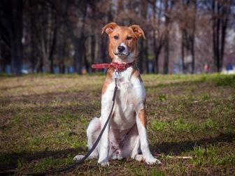 Свежее фото  Самый милый щенок Майло в добрые руки! 50050702 в Москве