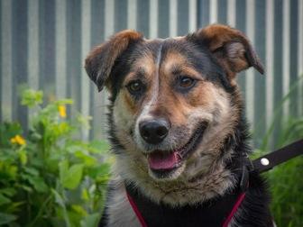 Новое фотографию  Добрый пес Рони в добрые руки, В дар, 50183234 в Москве