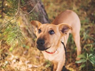 Скачать фотографию  Чудесный щенок Тина в добрые руки, 50198969 в Москве