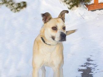 Скачать бесплатно foto  Ищет дом удивительно умная собака-улыбака, 56334609 в Москве