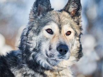 Смотреть foto  Красивая собака Луна в добрые руки, 57234097 в Москве