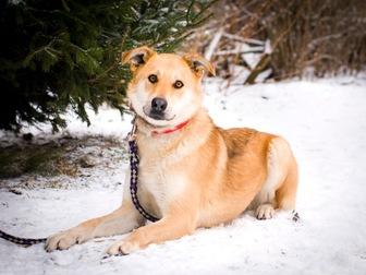Свежее изображение  Чудесная собака Сенди в добрые руки 58256394 в Москве