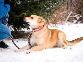 Новое фото  Чудесная собака Сенди в добрые руки 58256394 в Москве
