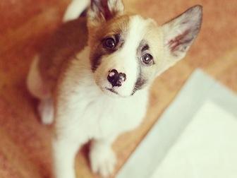 Скачать foto  Милые щенки в добрые руки 58267925 в Москве