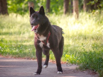 Смотреть фото  Маленькая собака Нора в добрые руки, 67657717 в Москве