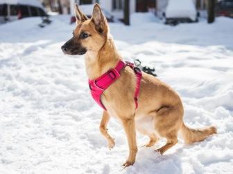 Скачать бесплатно фото  Чудесная собака Чили в добрые руки, 67664938 в Москве