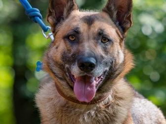 Смотреть foto  Молодой пес Туман ищет дом! 67666270 в Москве