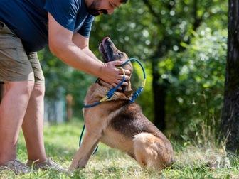 Скачать фотографию  Молодой пес Туман ищет дом! 67666270 в Москве