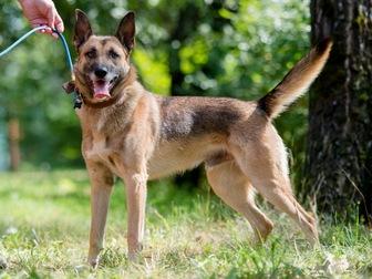 Скачать бесплатно фото  Молодой пес Туман ищет дом! 67666270 в Москве