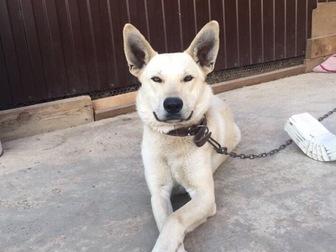 Свежее фото  Отдам собаку в добрые руки 68117598 в Краснодаре