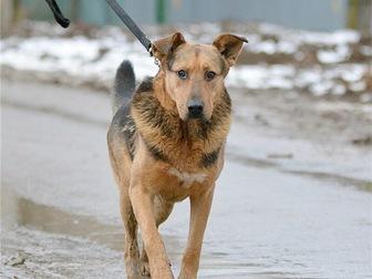 Увидеть фото  Чудесный пес Бутч ищет дом, 68121956 в Москве