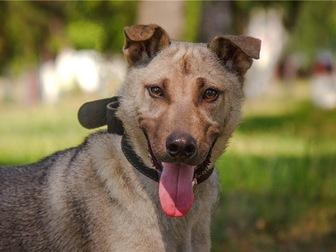 Просмотреть фото  Чудесный щенок Купер в добрые руки, 68125319 в Москве