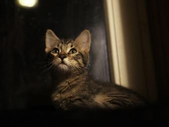 Смотреть фотографию  Очаровательный котенок (мальчик) в добрые руки, 68178961 в Москве