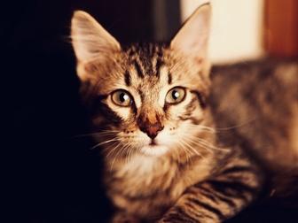 Просмотреть foto  Очаровательный котенок (мальчик) в добрые руки, 68178961 в Москве