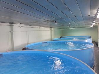Смотреть фото Разное Рыбная ферма на 2 тонны Сельское хозяйство/ рыбоводство 72586692 в Белгороде
