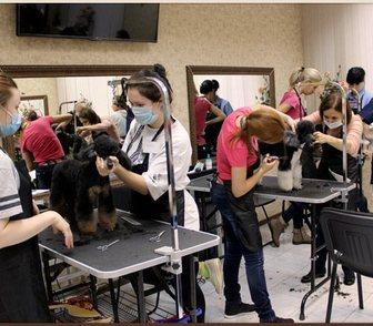 Фотография в Домашние животные Разное Всех, кто мечтает научиться стричь собак, в Москве 0