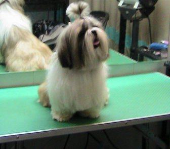 Изображение в Домашние животные Услуги для животных Стрижка собак и кошек. Стрижка (модельная в Москве 1000