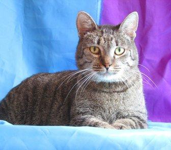 Фото в Кошки и котята Продажа кошек и котят Котик Вася ищет любящих хозяев, на вид вполне в Москве 0