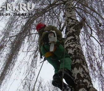Изображение в Услуги компаний и частных лиц Разные услуги Оказываем услуги по удаление деревьев частями в Москве 2500