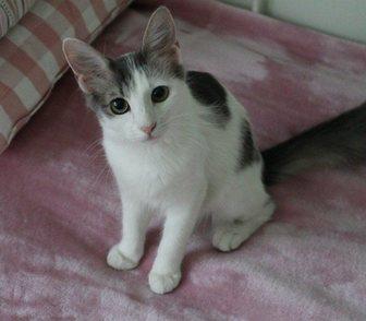 ���������� �   Kitty - �������� ����� �������� � ������, � ������ 0