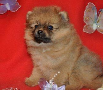 Изображение в Собаки и щенки Продажа собак, щенков Это щенки для Вас-девочки! Они очень милые! в Москве 23000
