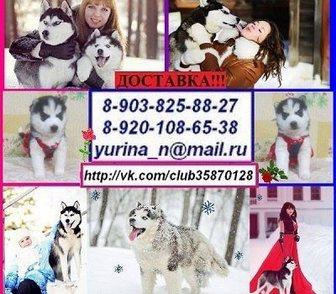 Фото в Собаки и щенки Продажа собак, щенков Ярких черно-белых окрасов красивенных щеночков в Москве 0